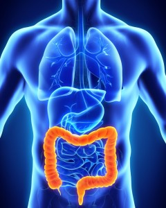 bigstock-Human-Colon-Anatomy-83816405-819x1024
