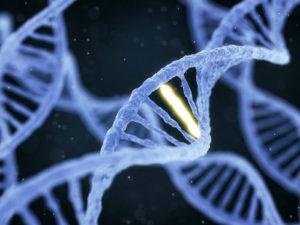 opus, DNA